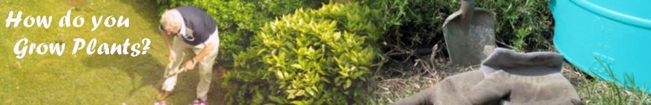 howdoyougrowplants.com